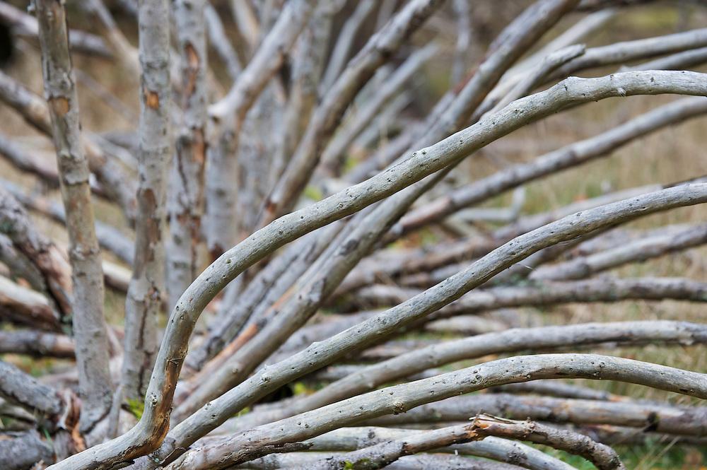 Dead Tree, Klampenborg Dyrehave, Denmark