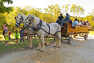 Old Bethpage, New York, U.S. 29th September 2013. Visitors ride in a wagon drawn by two white horses through the village streets at The Long Island Fair. A yearly event since 1842, the county fair now is held at a reconstructed fairground at Old Bethpage Village Restoration.