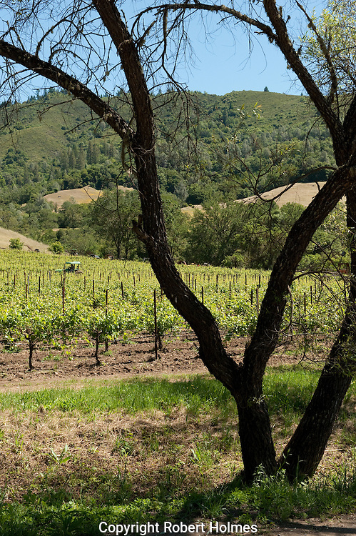 McFadden Farm and winery, Potter Valley, Mendocino County, California