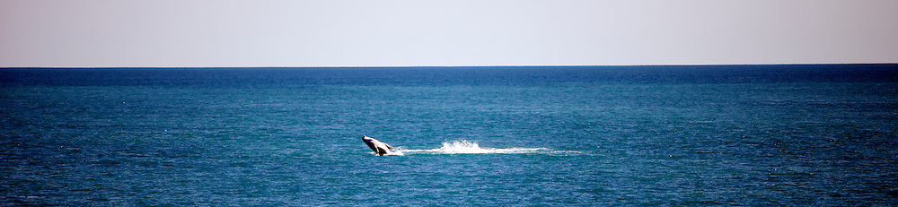 Whales around James Price Point, taken from the 'Steve Irwin' on Operation Kimberley Miinimbi with Seashepherd.