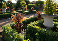 Cordyline plants in pots at sunrise in the Colonnade Court in the Laskett Gardens, Much Birch, Herefordshire, UK