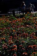 Belo Horizonte_MG, Brasil...Flores na  Praca da Liberdade em Belo Horizonte...Flowers in Liberdade square in Belo Horizonte...Foto: BRUNO MAGALHAES / NITRO