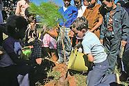 Tree Planting Atlanta Elementary School