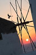 Alberto Carrera, Windmills, Mykonos, Cyclades Islands, Greece, Europe