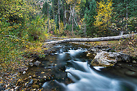 American Fork River flows through the lightly colored Fall leaves in American Fork Canyon.
