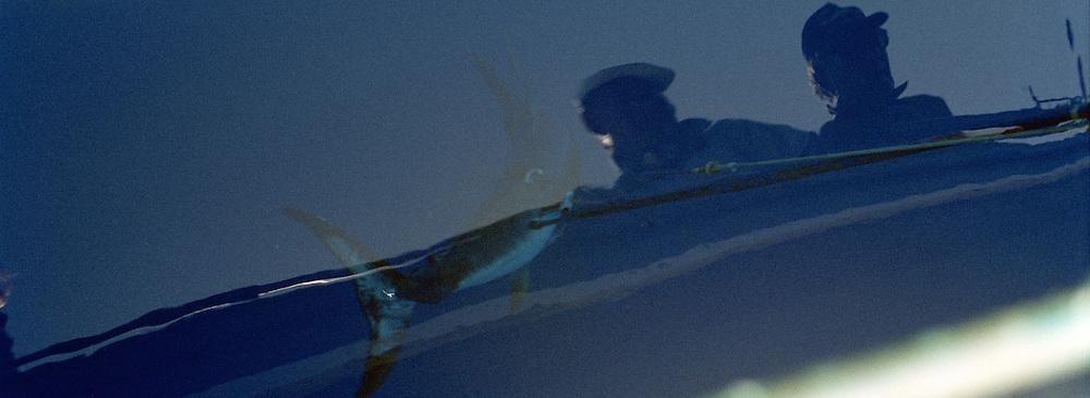 Il pesce Spada dello stretto cos&igrave; pescato &egrave; molto raro e per questo ha un prezzo di vendita elevato. Catturato in questo modo &egrave; dedicato a palati sopraffini. Di diverso sapore da quello pescato con la rete.<br /> Two fishemen keep fish.