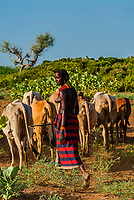 Dassanach tribe woman herding cattle, Omo Valley, Ethiopia.