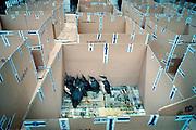 Frankrijk,Vannes, 10-01-2000..Geredde vogels in de opvang. Olievervuiling door het zinken van de olietanker Erica en de schoonmaak door vrijwilligers. De oliemaatschappij Total staat nu, vanaf 12-2-2007 terecht voor de gevolgen. Veel hulpverleners hebben een verhoogde kans opkanker, omdat destijds met beperkte bescherming werd gewerkt, en tienduizende vogels kwamen om vanwege dit ongeluk met deze tanker voor de kust...Foto: Flip Franssen