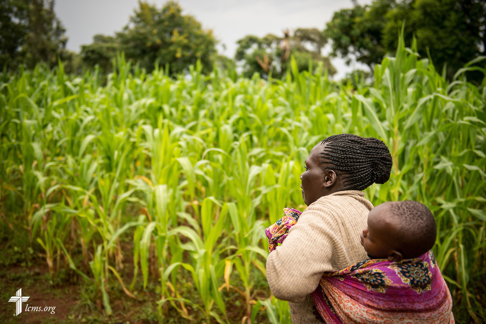 Deaconess Peris S. Kipchumba carries her grandson through a plot of land farmed with corn for the nearby U-Dom ELCK (Evangelical Lutheran Church in Kenya) Project 24 site on Wednesday, June 22, 2016, in Chepareria, Kenya.  LCMS Communications/Erik M. Lunsford