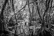 Fakahatchee Strand Preserve State Park, everglades gallery johnbobcarlos johnbob