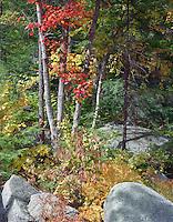 Fall foliage, Stoddard, New Hampshire.