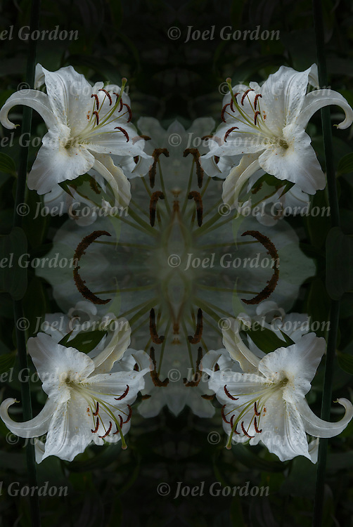 Photographic series of digital  Lily computer art.<br /> <br /> Two or more layers used to enhance, alter and manipulate the image, creating an abstract surrealistic mirrored symmetry.