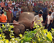 Caption of the pix : Around 07-numbers of wild elephant were killed and one seriously injured on 22nd September, 2010 at mid-night, when a speeding goods train hit the animals, while the elephants were crossing railway tracks near Binnaguri in Jalpaiguri district of Northeast Indian State, West Bengal. Shib Shankar Chatterjee