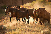 Mares and Foals on the San Cristobal Ranch in New Mexico