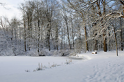 Schaep en Burgh Winter, koud, cold snow, sneeuw, winter, cold, wit, white