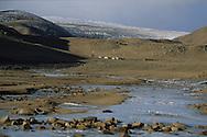 Mongolia. in the yurt - ger - of Gambolt family, nomads and catle breeders in the steppe in Shuranga near  Uyanga -   /  dans la yourte de la famille Gambolt , eleveur nomade dans la steppe a Shuranga pres de  Uyanga - Mongolie