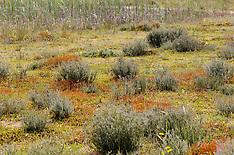 Kuinderbos, Staatsbosbeheer, Bant, Noordoostpolder,  Flevoland, Netherlands
