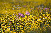 Wildflower Country