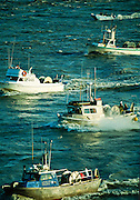 Alaska, Kenai.  Aerial view of commercial fishing boats returning with a load full of red salmon. Cook Inlet.