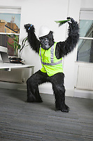 Angry male engineer in gorilla costume and safety wear at office