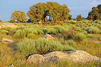Cork oak mosaique landscape PORTUGAL/FAIA BRAVA NATURE RESERVE, CÔA VALLEY, DOURO The Faia Brava reserve is part of the greater Côa valley and one of the wildest areas in Portugal. Here the traditional small-scale agriculture and shepherd life is rapidly disappearing and lands are becoming abandoned. In 2011, Portugal had some 2 million hectares of abandoned farmland, and across the EU each year another million hectares of low-yield farm and pasture lands are being abandoned. This has many reasons, but mainly it seems to be because young Europeans simply don't want to be goatherds, shepherds or subsistence farmers any more, instead preferring the more comfortable life in a town or a city. The old farm and pasture lands now rapidly turn into dense bush, and a lot of species disappear that are connected to the open landscapes. The risk for devastating forest fires also increases a lot with much more dry bush matter available in the landscape. The Rewilding Europe initiative is about trying to turn these problems into opportunities instead. Can we use nature in new ways, that might be even more respectful to nature itself and at the same time more profitable for man? Especially since several of the traditional ways most obviously are not working anymore in quite large areas of Europe. The Faia Brava nature reserve is part of the Rewilding Europe initiative and it is owned and run by Associação Transumância e Natureza (ATN). The Côa valley is the largest outdoor rock carving site in Europe, with carvings dating from 35,000 years ago up to present. The main theme of these carvings is very clear: aurochs, wild horses, ibex and red deer. All of them extinct today in the area, but also all on the list for reintroduction through the Rewilding Europe initiative. Photo: Staffan Widstrand/Wild Wonders of Europe