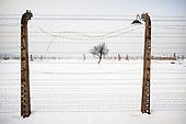 Auschwitz's Memento