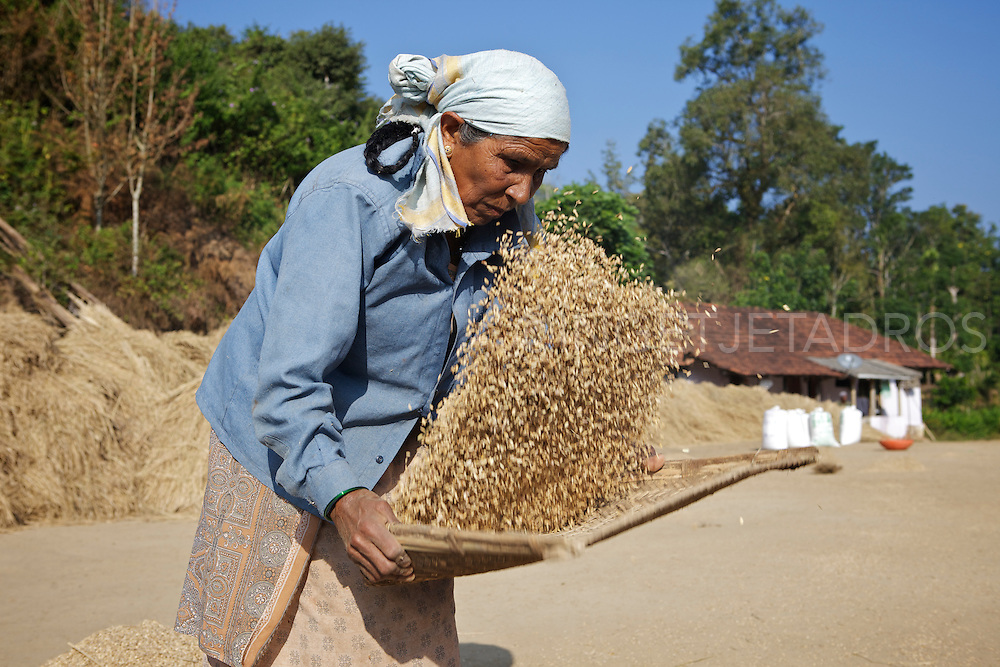 Woman sorting out rice on a rice plantation.<br /> &copy;Ingetje Tadros<br /> <br /> http://www.gettyimages.com.au/Search/Search.aspx?contractUrl=2&amp;language=en-US&amp;assetType=image&amp;p=ingetje+tadros#2