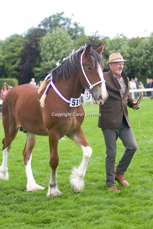 Bob Lowrie's Bay Colt<br />