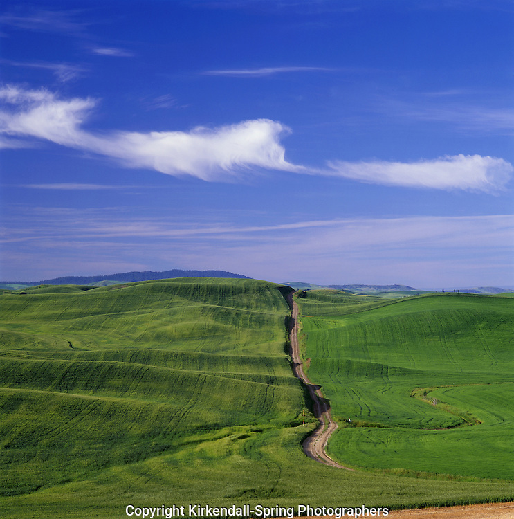 BB07330-02...WASHINGTON - Farm road through the fertile fields of Whitman County near the town of Palouse.