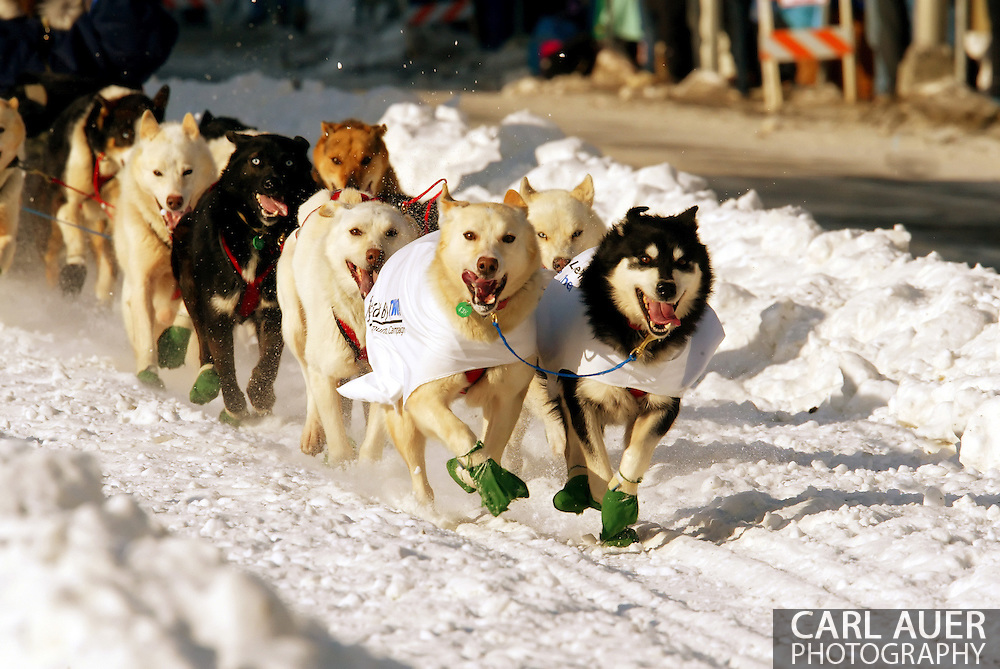 3/3/2007:  Anchorage Alaska -  The dog team of Veteran Mike Williams of Akiak, AK during the Ceremonial Start of the 35th Iditarod Sled Dog Race