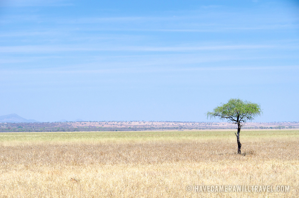 A solitary tree stands out against the wide flat swamp plains at Tarangire National Park in northern Tanzania not far from Ngorongoro Crater and the Serengeti.