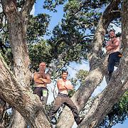 tricky trees boys