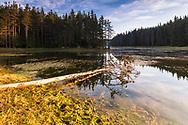 Fallen tree in the lake