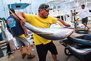 July 16, 2014; Virginia Beach, VA, USA; Tuna are unloaded from a boat. Mandatory Credit: Peter J. Casey