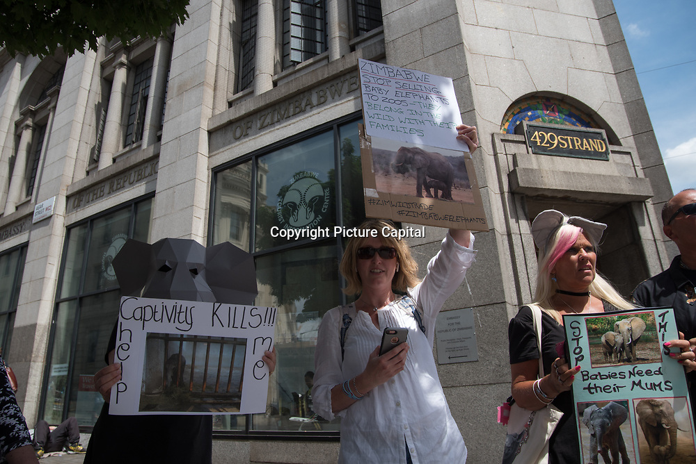 Animal rights activists Protest against the Zimbabwe Live Baby Elephants Trade to Zoos Worldwide demand for an end now on June 15 2018 at the Embassy of Zimbabwe, London, UK.