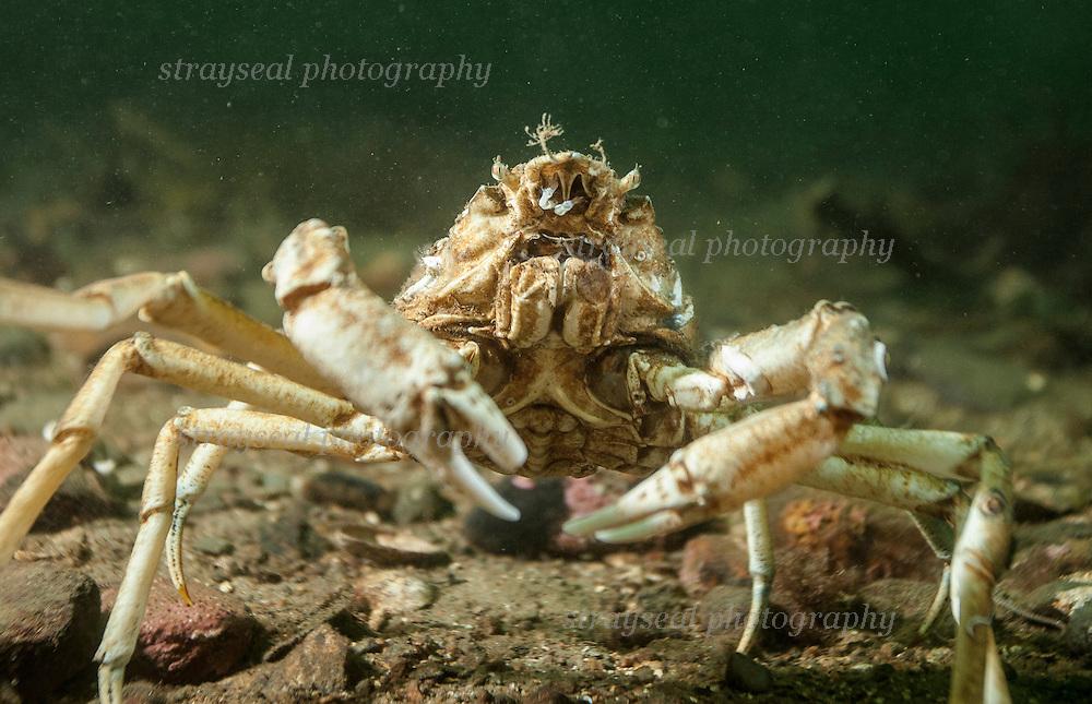 Underwater wildlife filming in Scotland