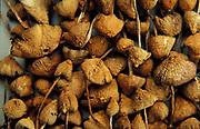 Drying hallucinagenic Magic Mushrooms UK 2000