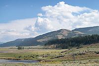 Bison Herd Lamar Valley Yellowstone National Park