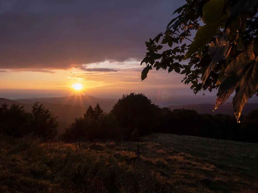 Morning dew and mountain landscape during sunrise, Stosswihr, Vosges, France