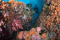 A diver inspects a soft coral encrusted reef nook...Shot in Indonesia..