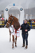 The horse African Art in the winners enclosure of White Turf 2011 horse  racing event in St Moritz, Switzerland.