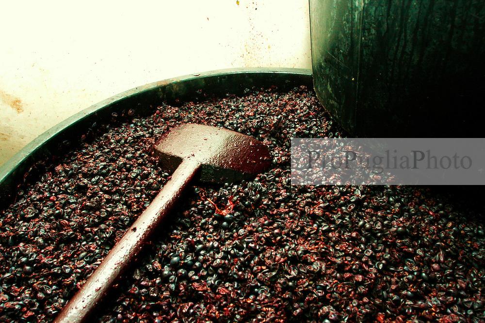 Una volta spremuta l'uva, la si lascia riposare per un giorno dentro delle grosse vasche di plastica insieme alle bucce; questo procedimento serve affinchè il mosto si colori e si riempia di lieviti che attiveranno la prima fermentazione chiamata tumultuosa. Nel corso della giornata le bucce si compattano formando un tappo; questo tappo di volta in volta viene rotto grazie all'ausilio di un grosso bastone. La rottura del tappo fà si che fuoriesca l'anidride carbonica che si viene a creane in questa prima fermentazione.