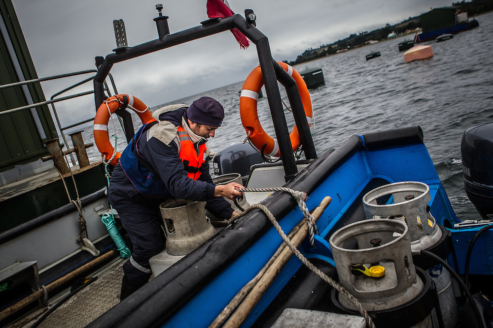 CHILE - MARCH 14, 2014: Staff members of AquaChile, the largest exporter of salmon in Chile, work at their marine farm, monitoring salmon stocks near Puerto Montt in southern Chile. PHOTO: Meridith Kohut for The World Wildlife Fund