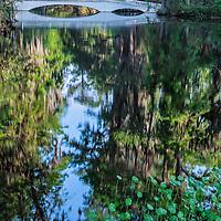 Long bridge and trees with Spanish moss reflect in the large pond at Magnolia Plantation, Charleston, South Carolina