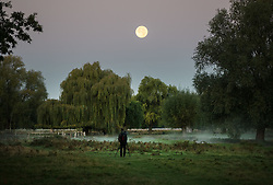 © Licensed to London News Pictures. 06/10/2017. London, UK. A photographer captures Harvest moonset in Bushy Park just before sunrise. A high of 15 centigrade is expected in parts of the south today. Photo credit: Peter Macdiarmid/LNP