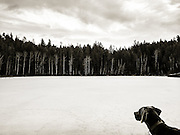 Sugar at frozen  Estes Lake