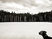 Sugar at frozen  Estes Lake