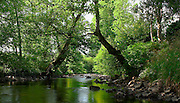 Green Cathedral, river running through Tynron