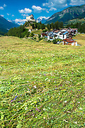 Mown hay with wildflowers in the Lower Engadine Valley, Switzerland