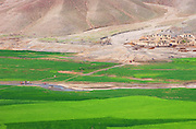 Green wheat field and mountainous landscape between Jalalabad and Kabul, Afghanistan. 2002